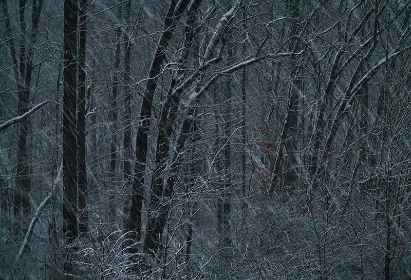 Sean Kernan -  Snowfall in Trees