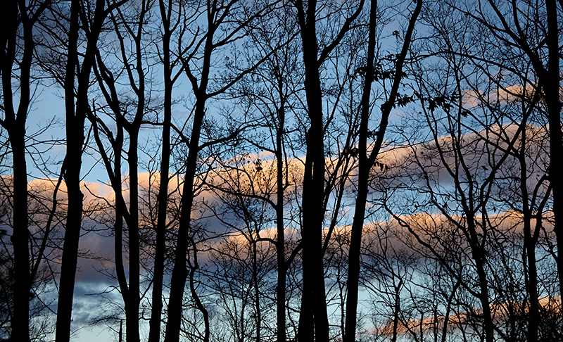 Sean Kernan -  Tree and Clouds