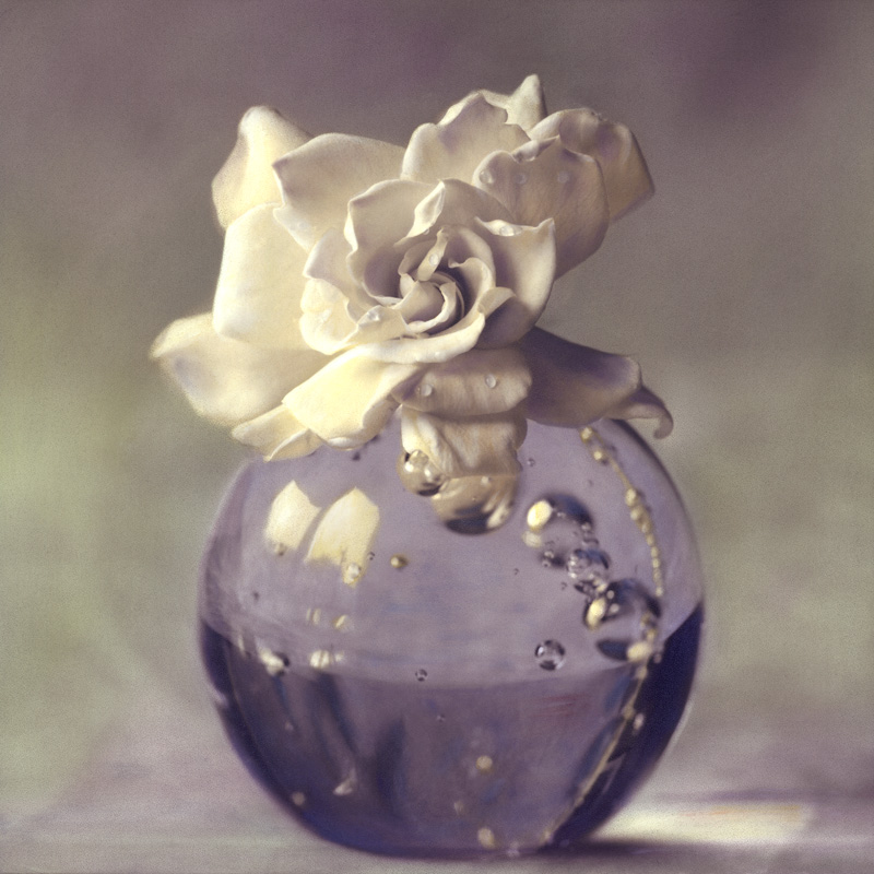 Gardenia IV