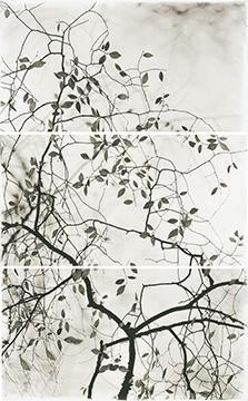 Late Leaves V
