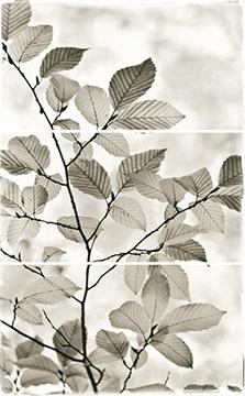 Pale Leaves II