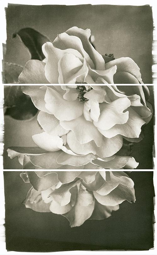 Rose Duet