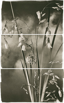 Valley Grasses III