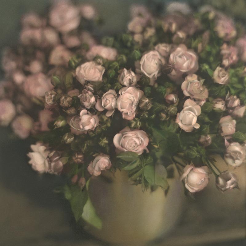 Frankfurt Roses.jpg