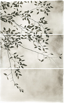 Late leaves III.jpg