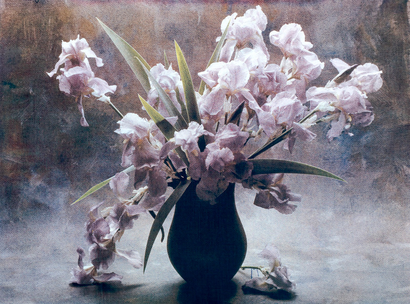 Moonlight Irises