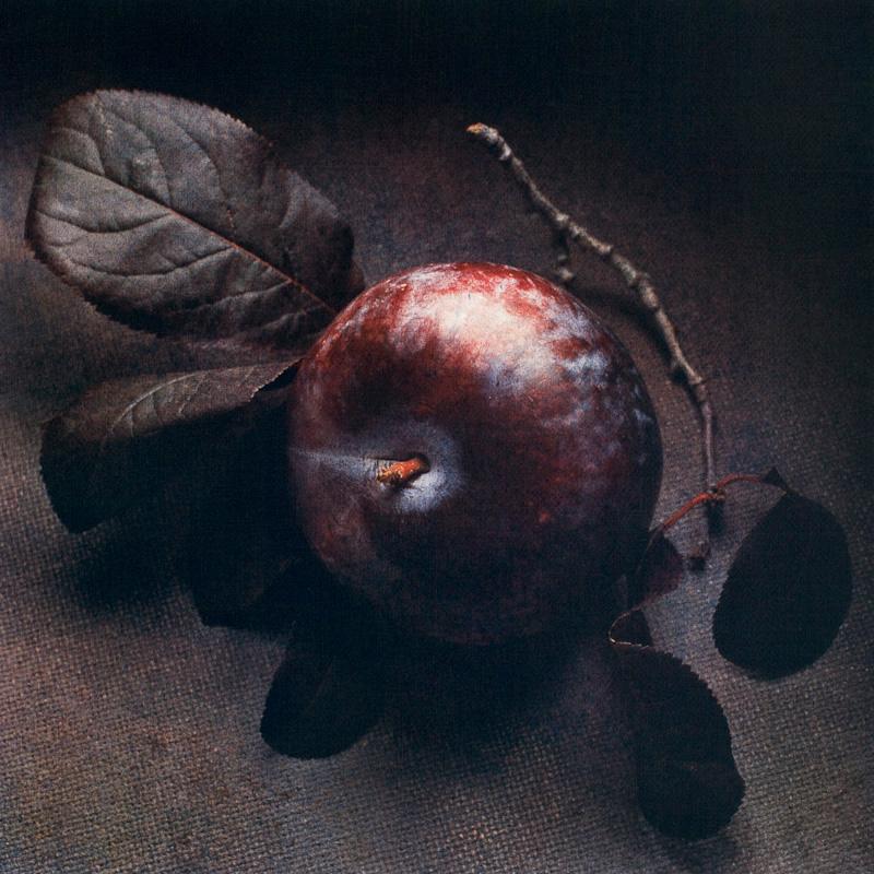 Autumn Plum II