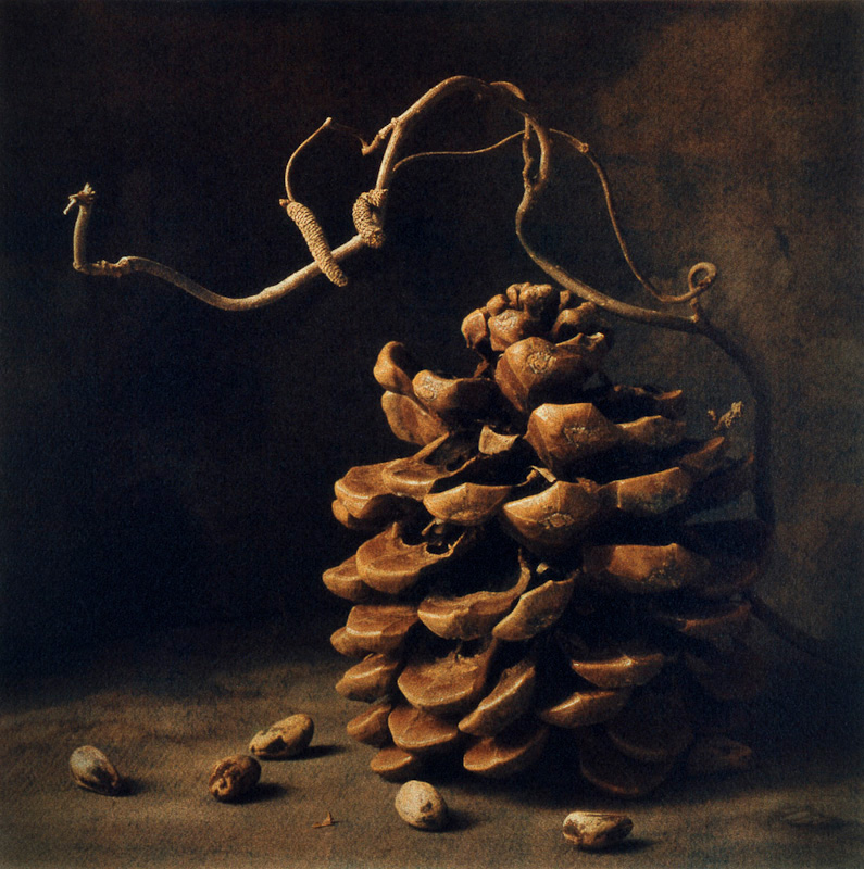Winter Pine Nuts II