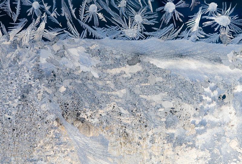 Snow Daisies