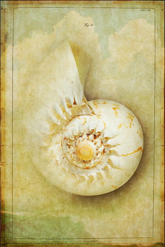 Shell #2.jpg