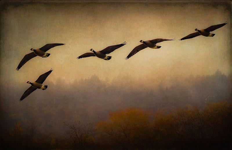 Nisqually Flight