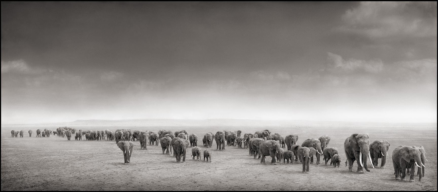Elephant Exodus
