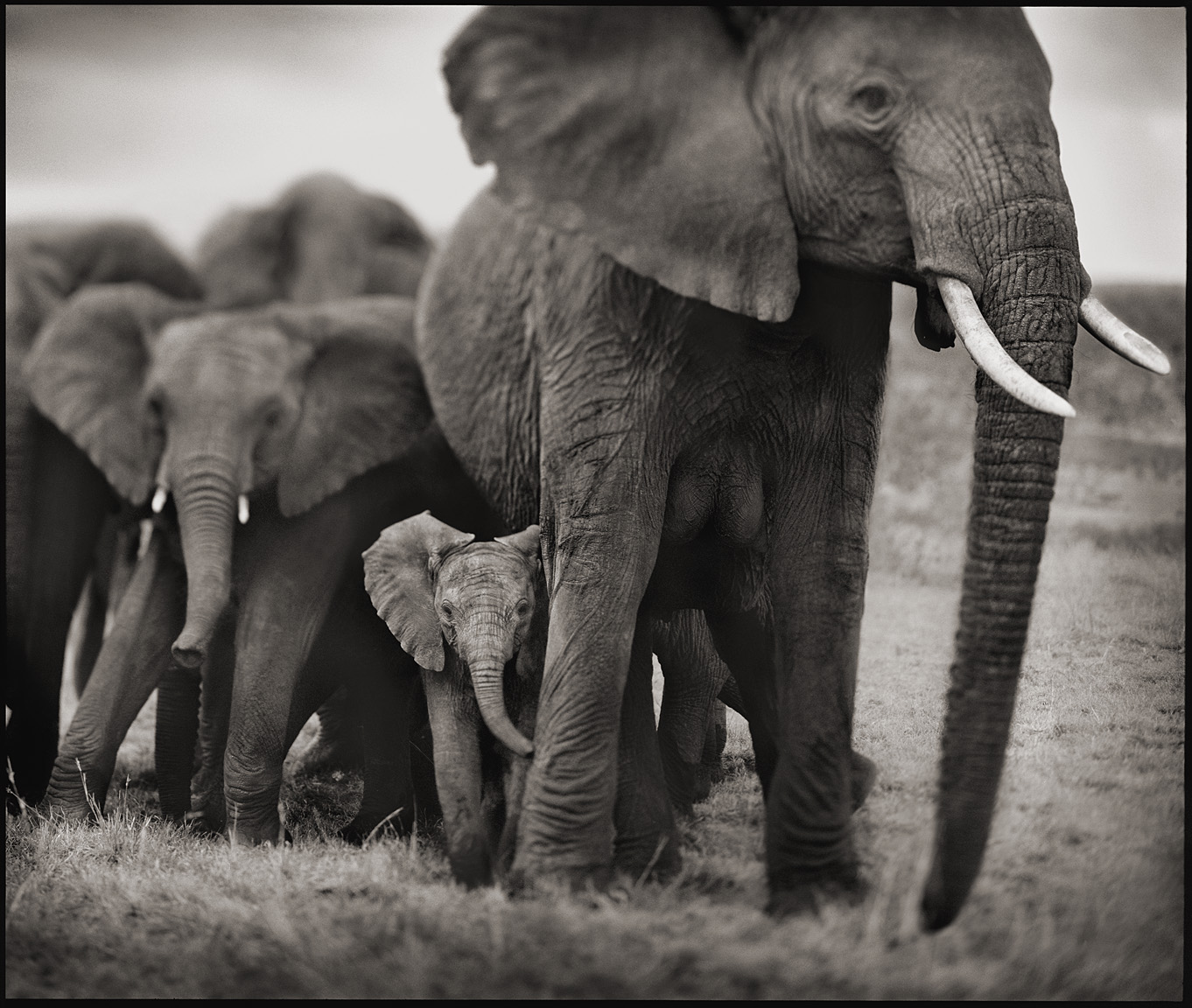 Elephant Mother with Two Babies