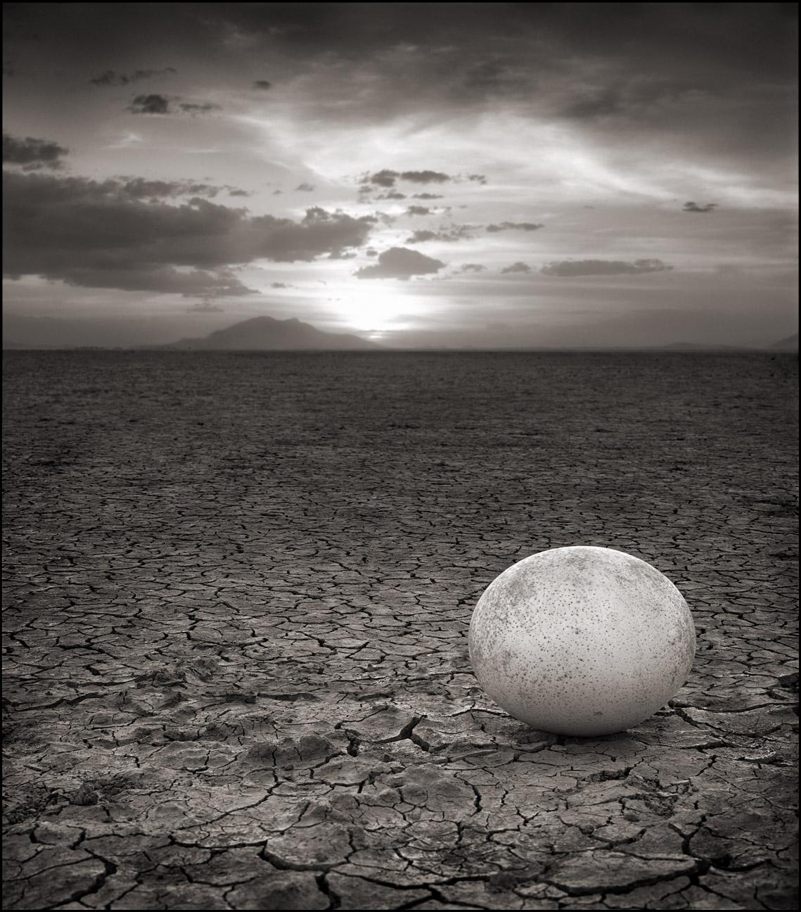 Abandoned Ostrich Egg