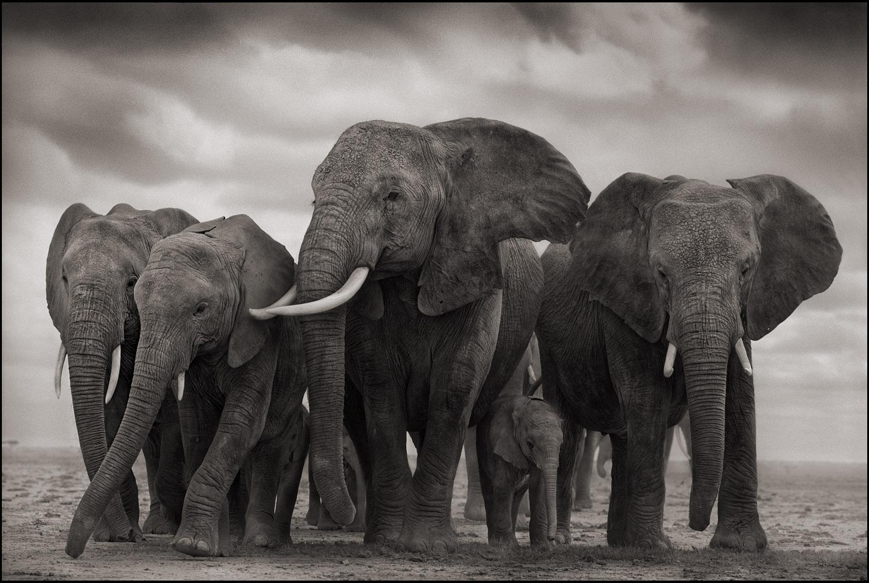 Elephant Five