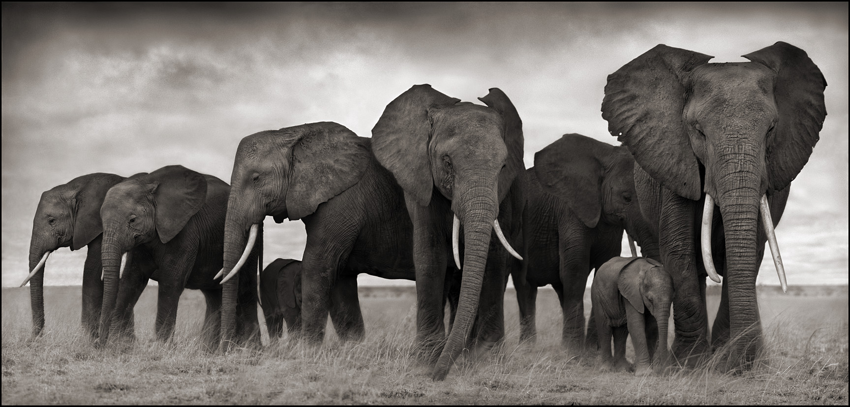 Elephants Resting