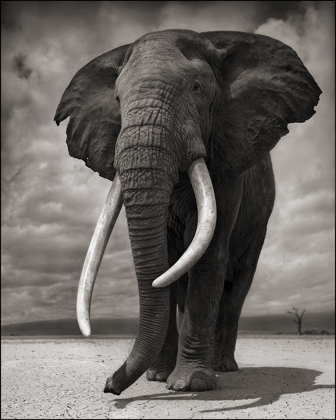Elephant on Bare Earth