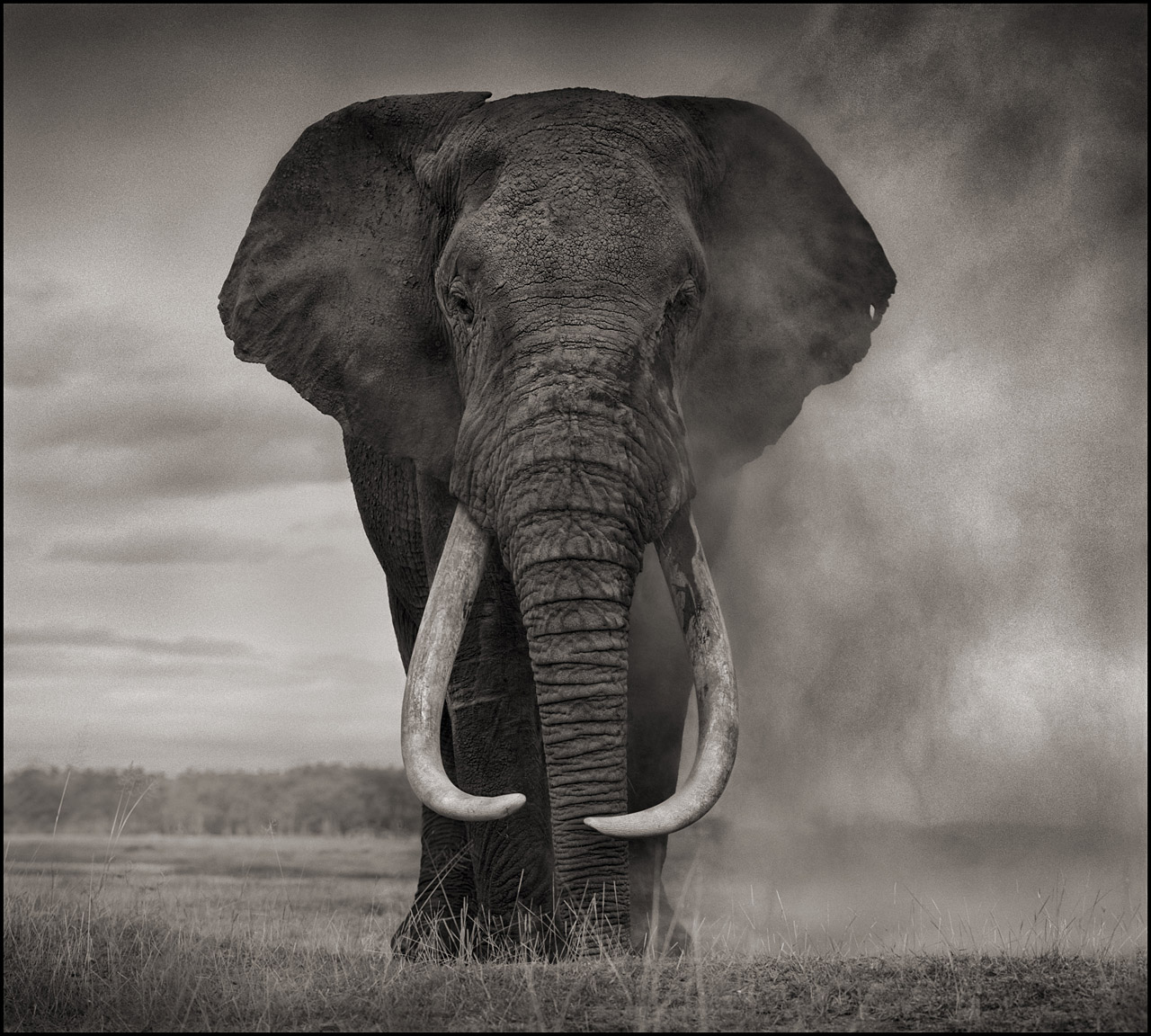 Portrait of Elephant in Dust