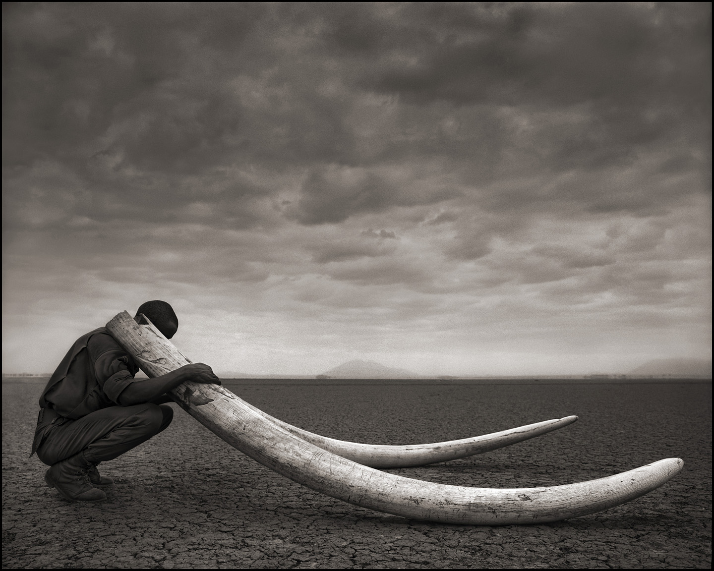 Ranger with Tusks of Killed Elephant
