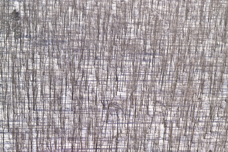 Woven Woods