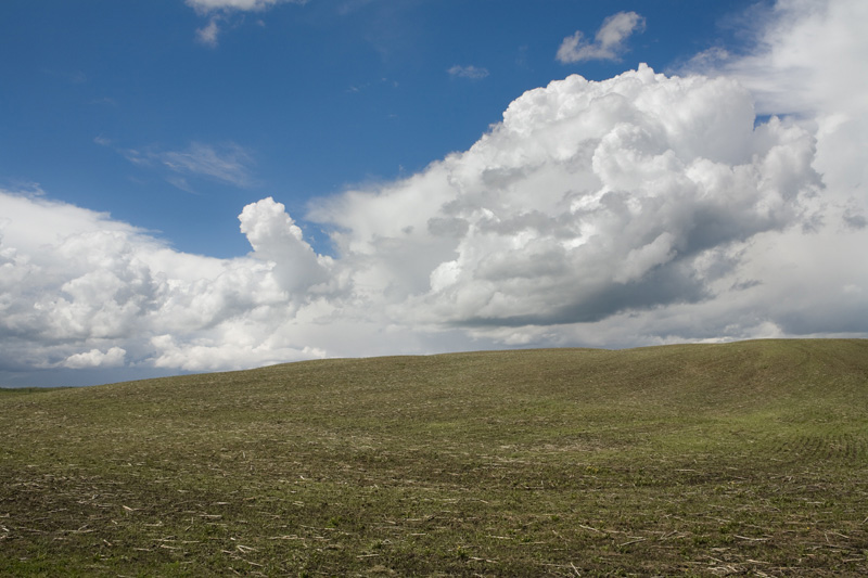 Spring Field (5), June 2008