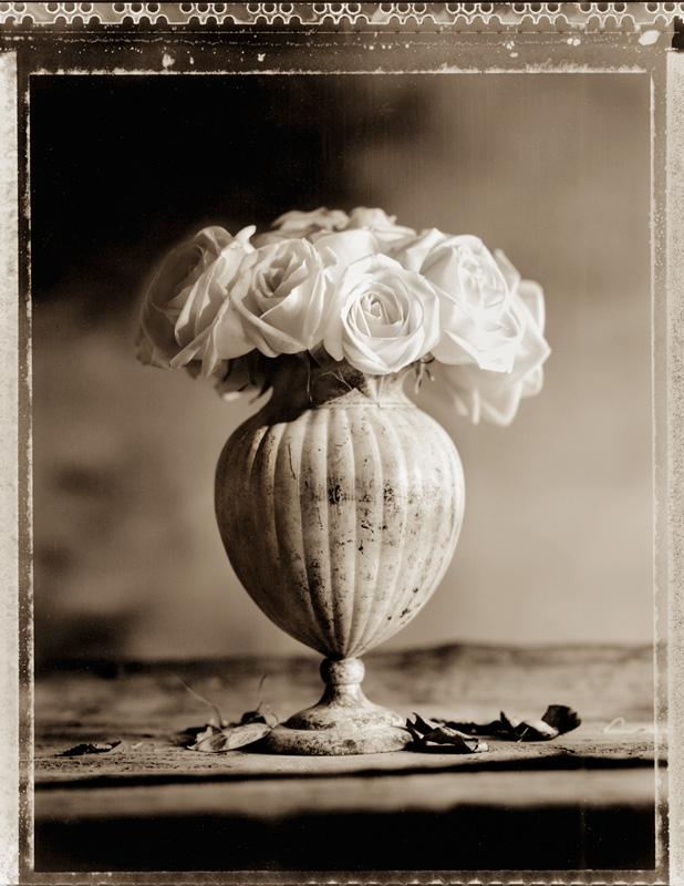Roses in Round Vase