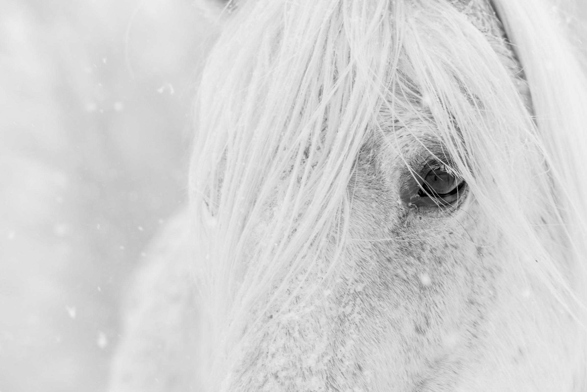 Snow Glance