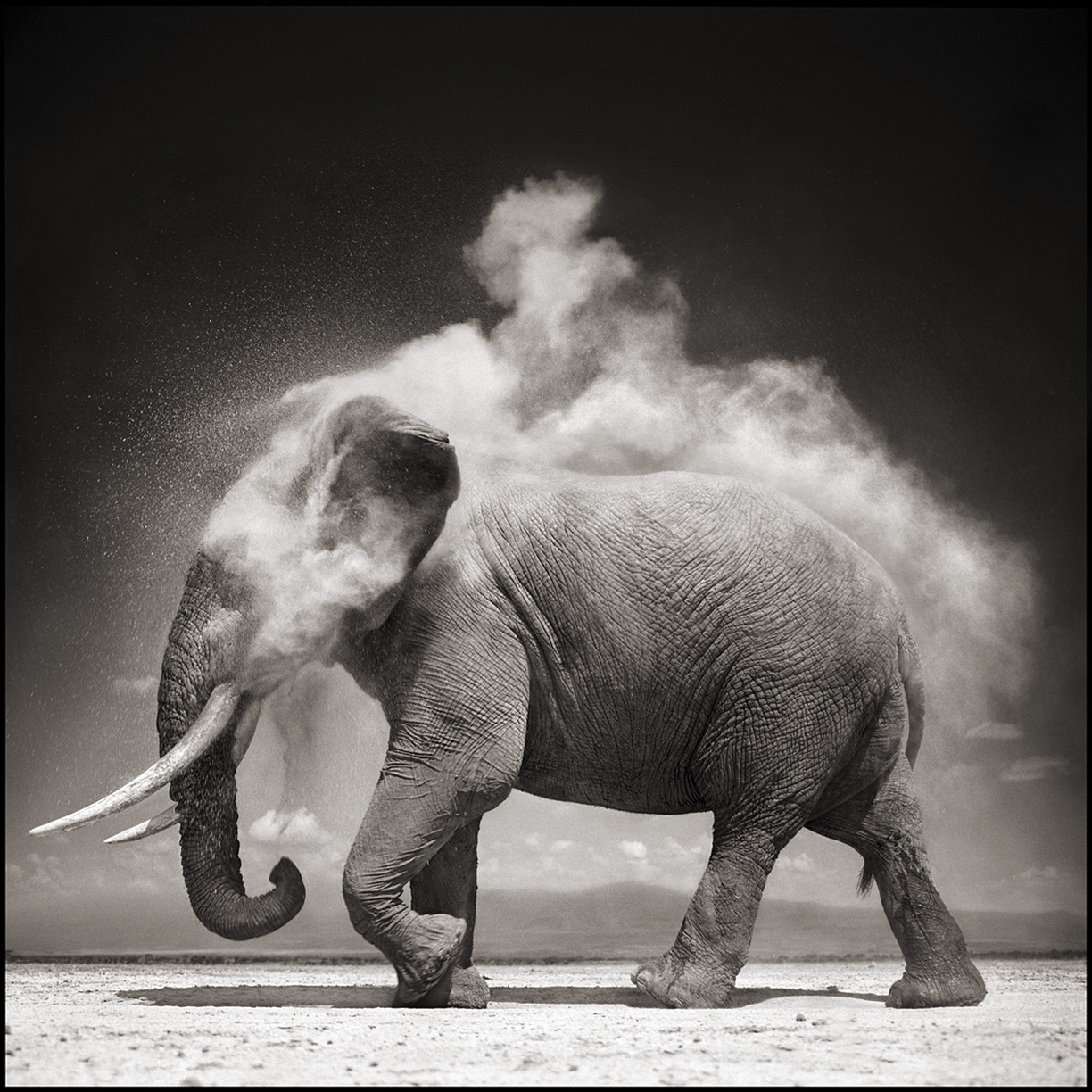 Elephant with Exploding Dust