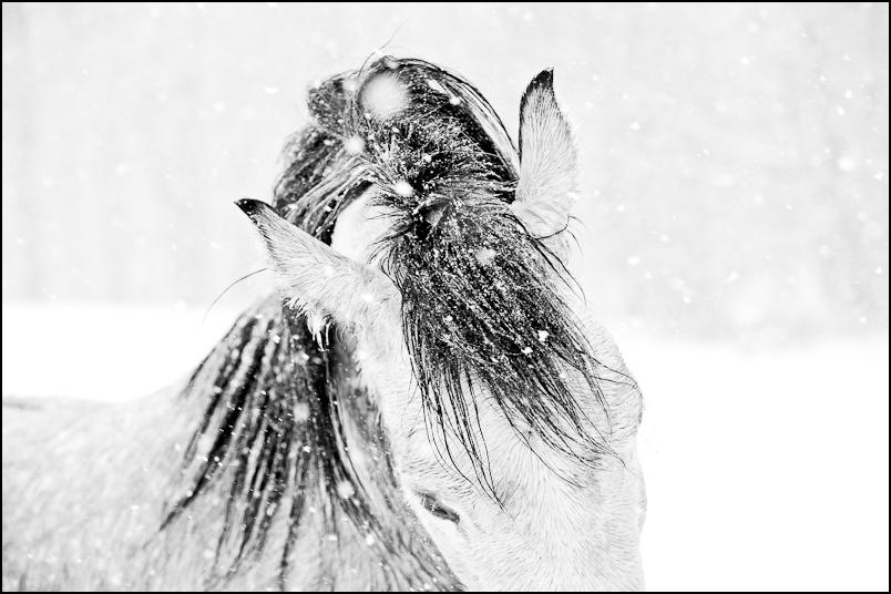 Snow Dance.jpg