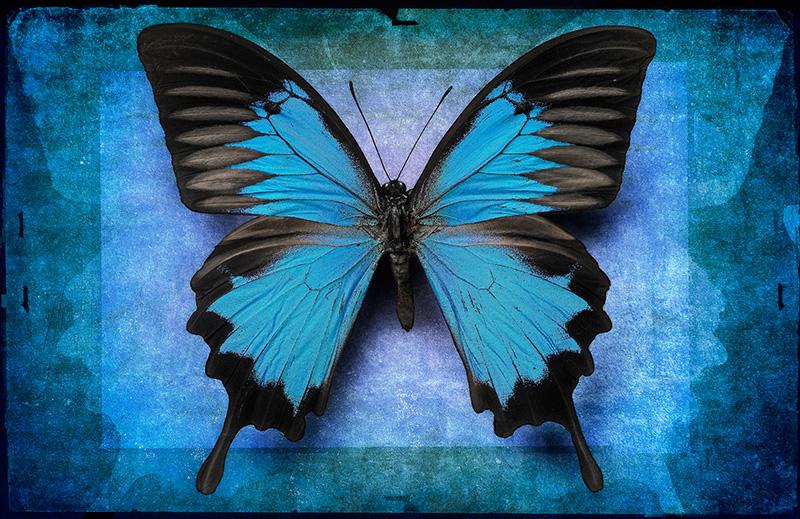 Blue Ulysses.jpg