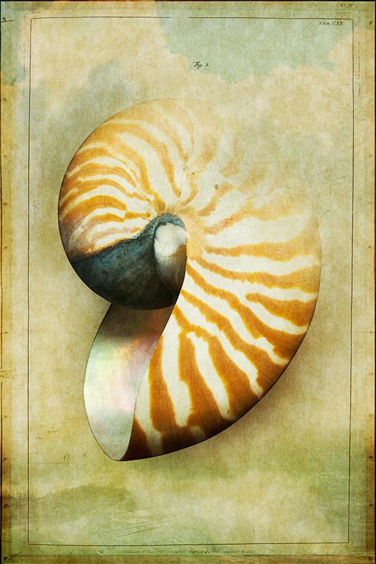 Shell #3.jpg