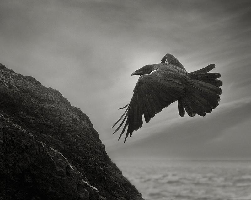 Odin's Cove #14.jpg