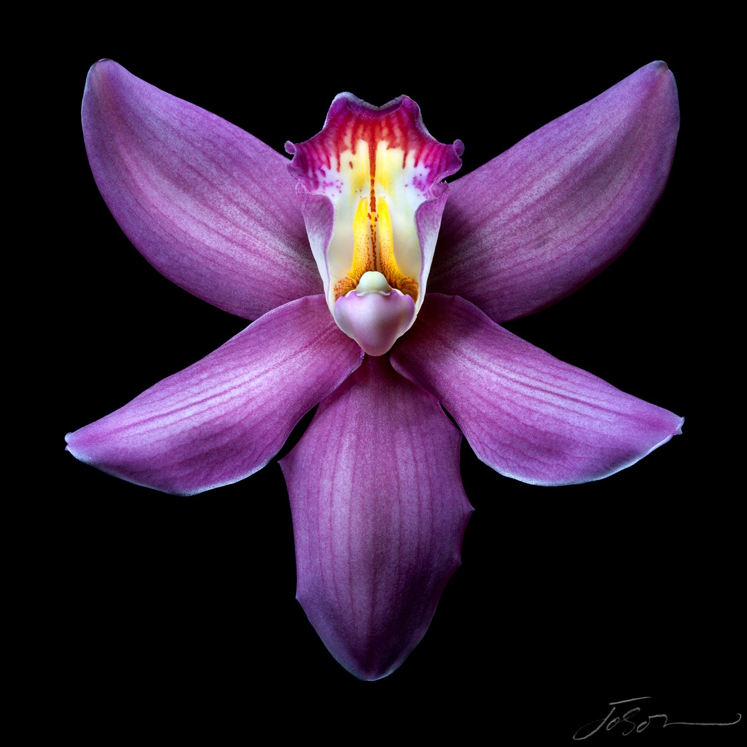 Purple Orchid (Orchidaceous).jpg