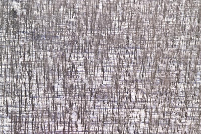Woven Woods.jpg