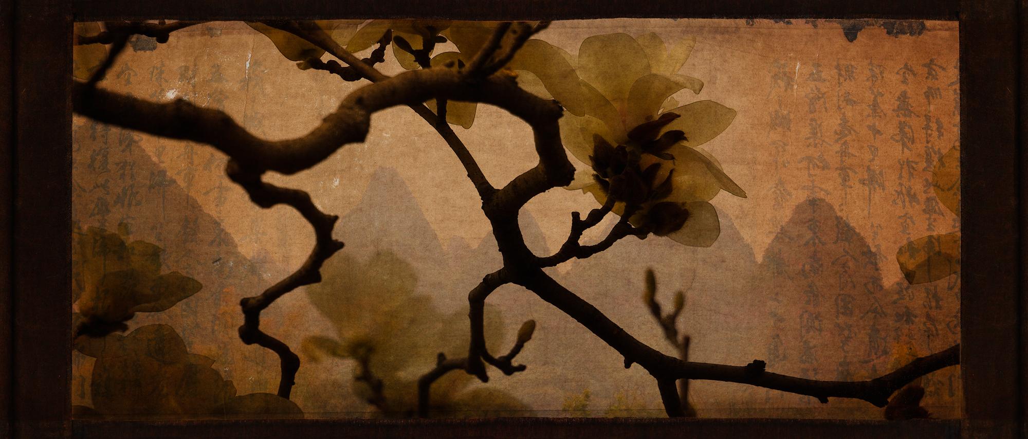 China Magnolia.jpg