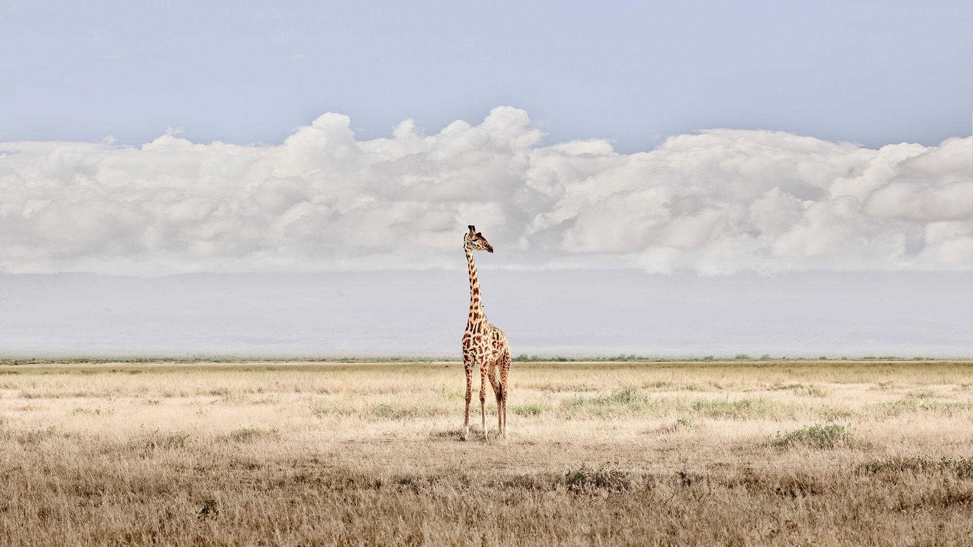 Head in the Clouds, Amboseli, Kenya, 2019.jpg