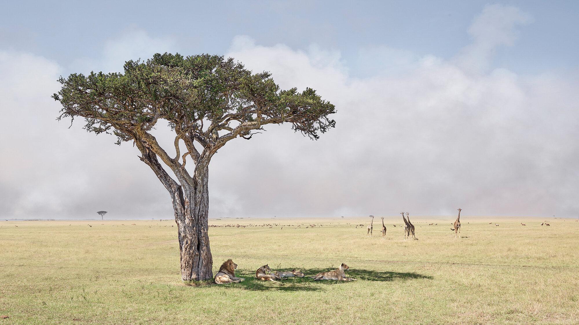 Paradise, Maasai Mara Kenya, 2019.jpg