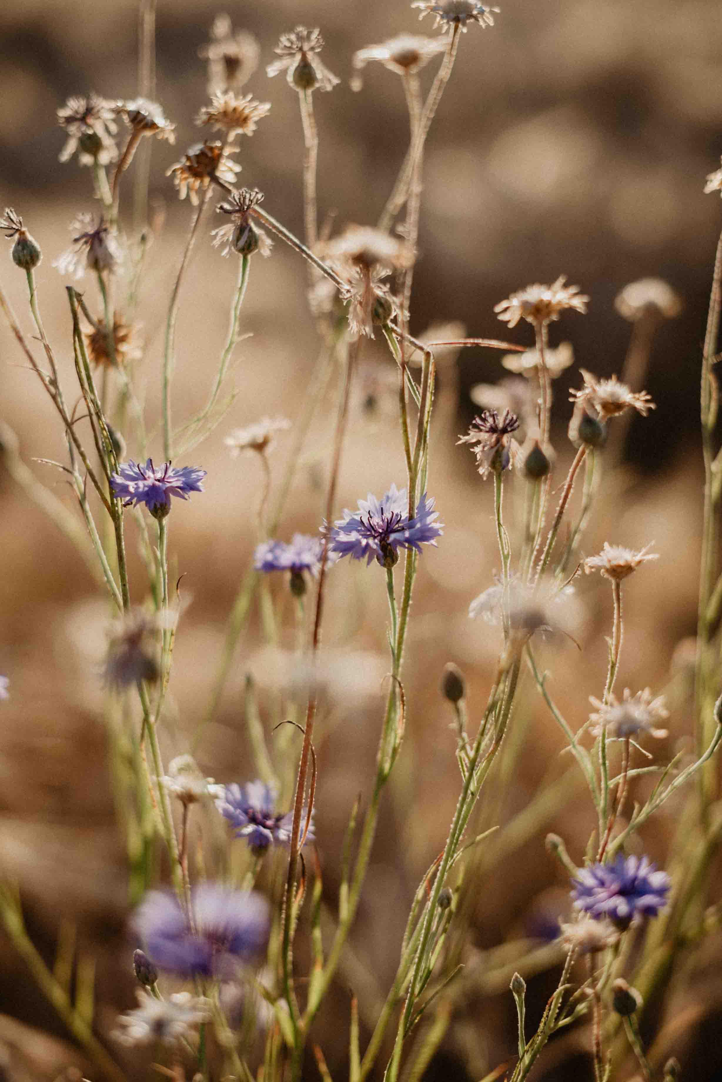 Boho Hochzeit Fotograf_by OH LUCY WEDDING PHOTOGRAPHY-30.jpg