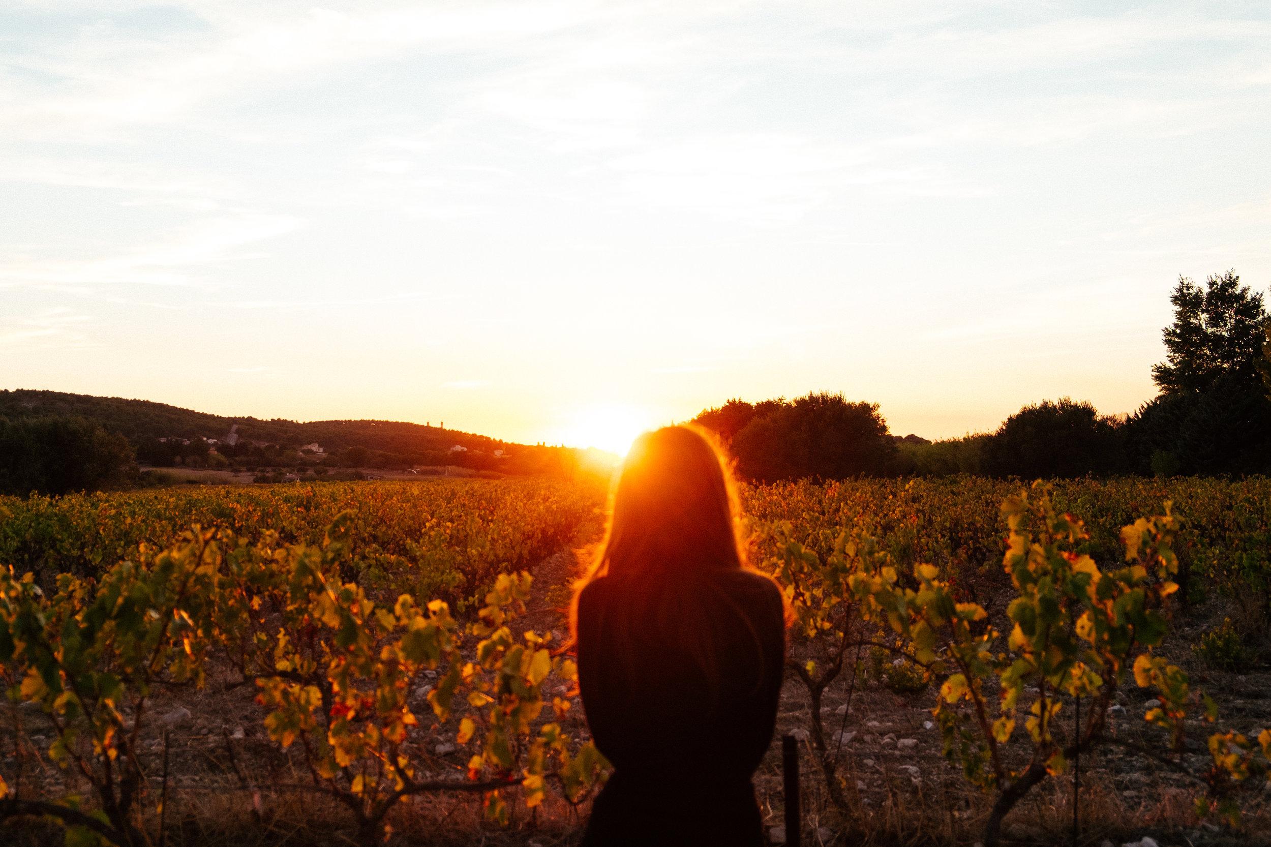 Vineyard Sunset , Provence, France