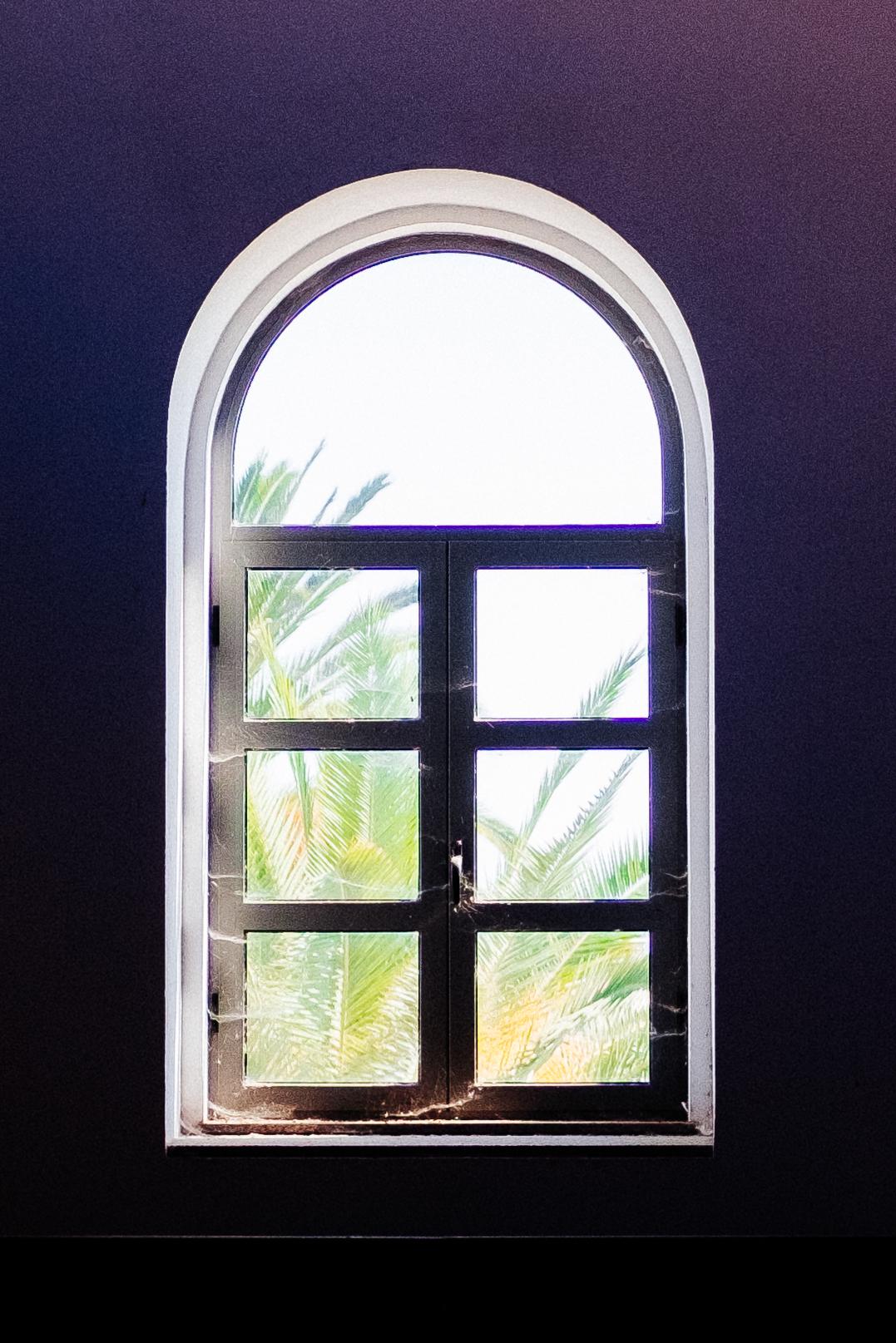 Palm Window