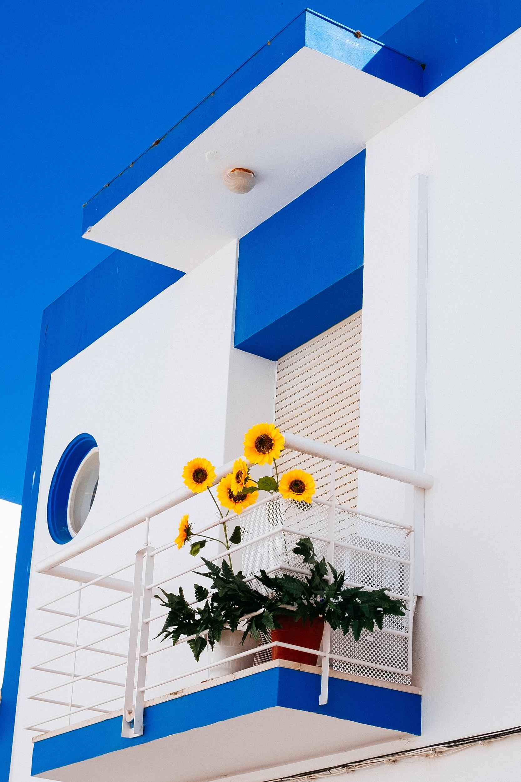Sunflowers , Lagos, Portugal