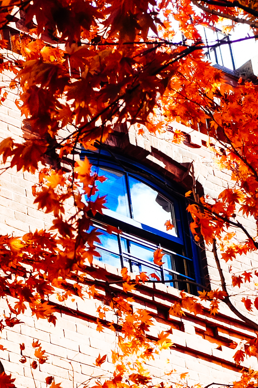 Fall Window, Brooklyn NY