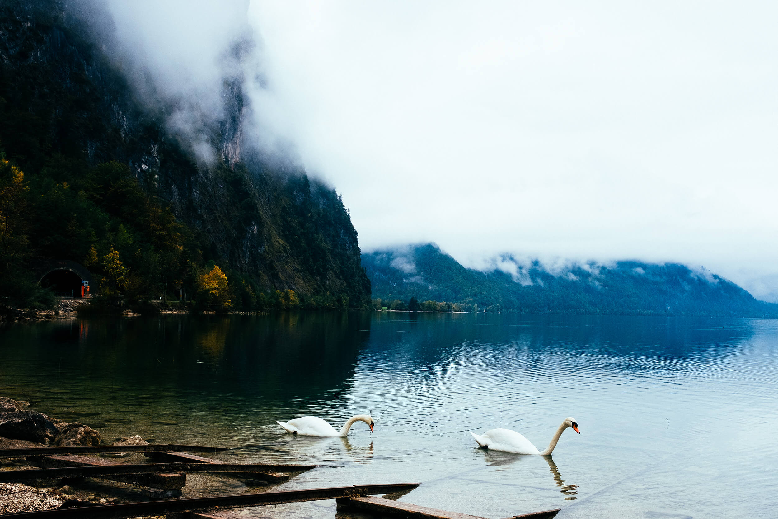 Swan couple on the Attersee Lake