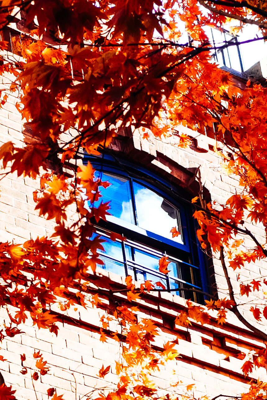 strangers-windows-brooklyn-fall.jpg