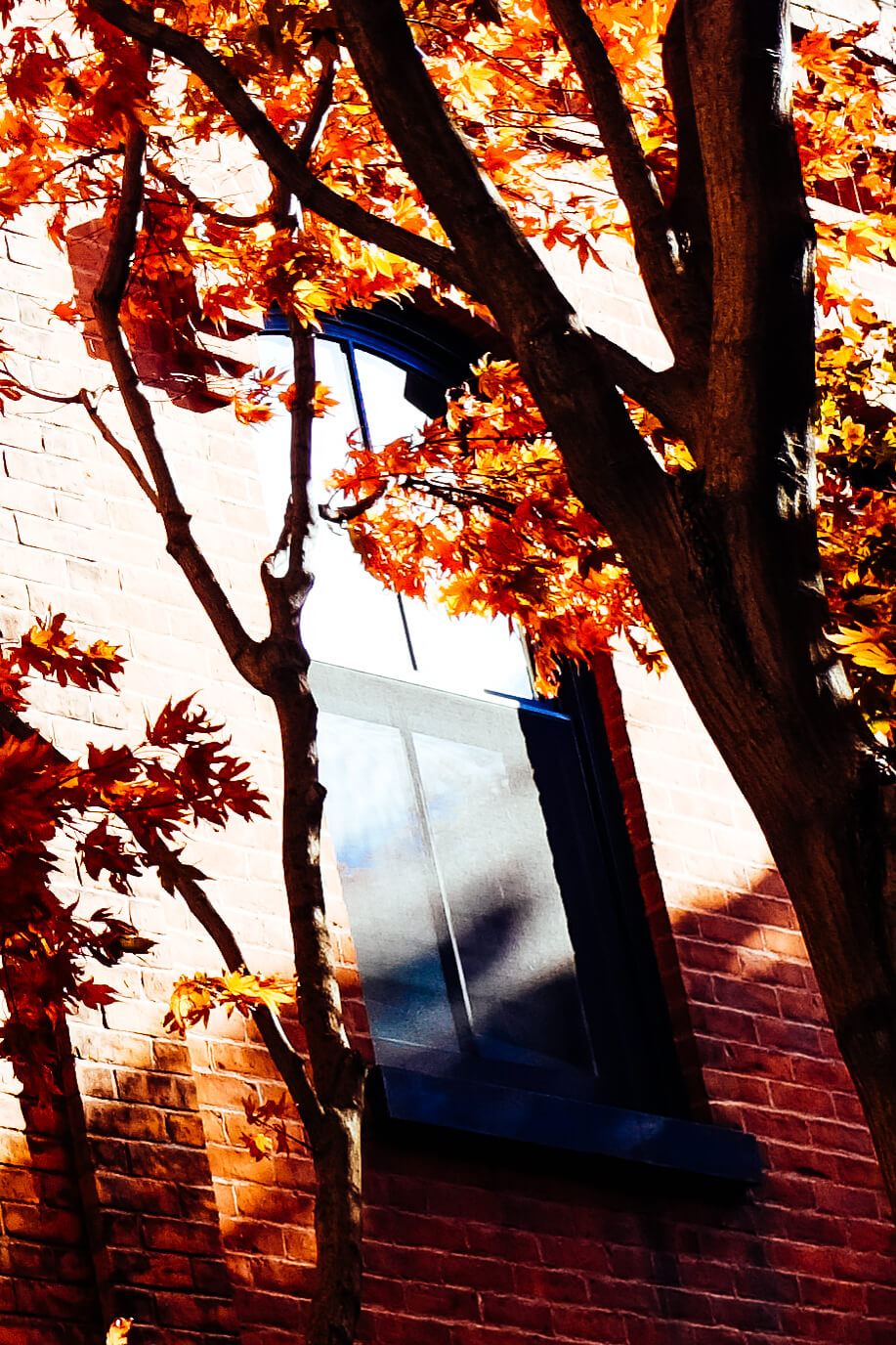 strangers-windows-brooklyn-autumn.jpg