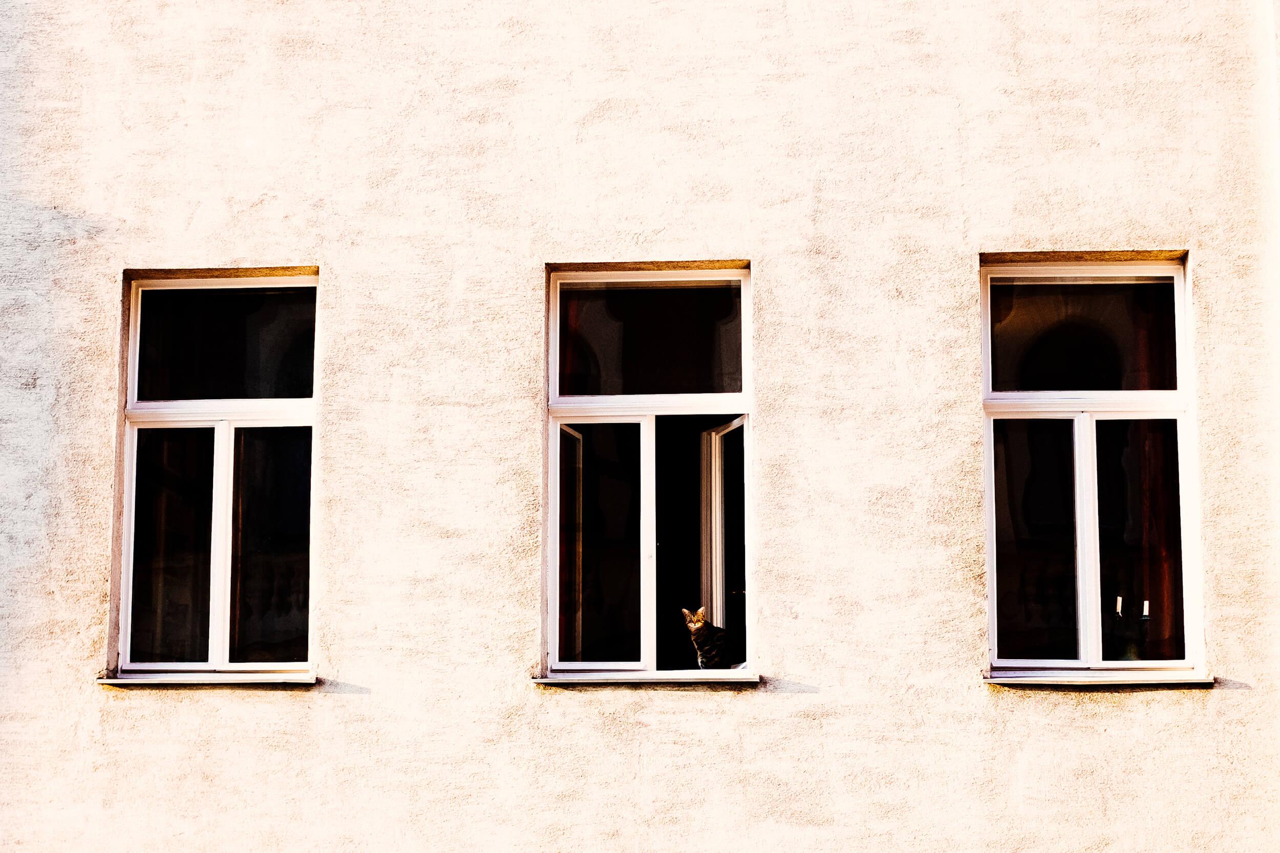 strangers-windows-cat-vienna.jpg