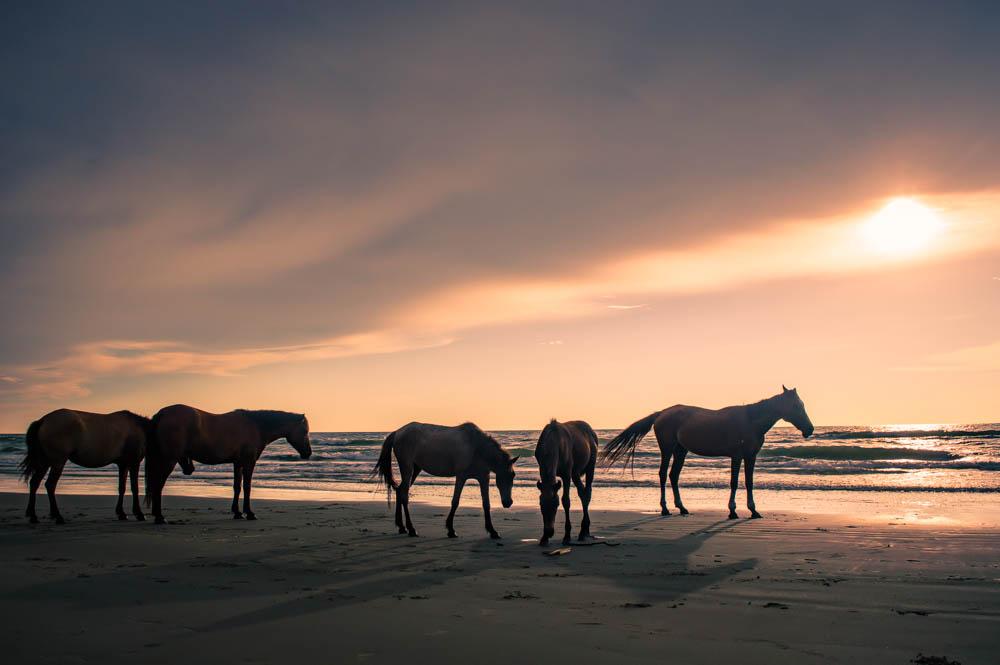 Sabandar-Beach-Sabah-Malaysia-0020.jpg