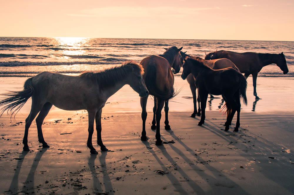 Sabandar-Beach-Sabah-Malaysia-0006.jpg