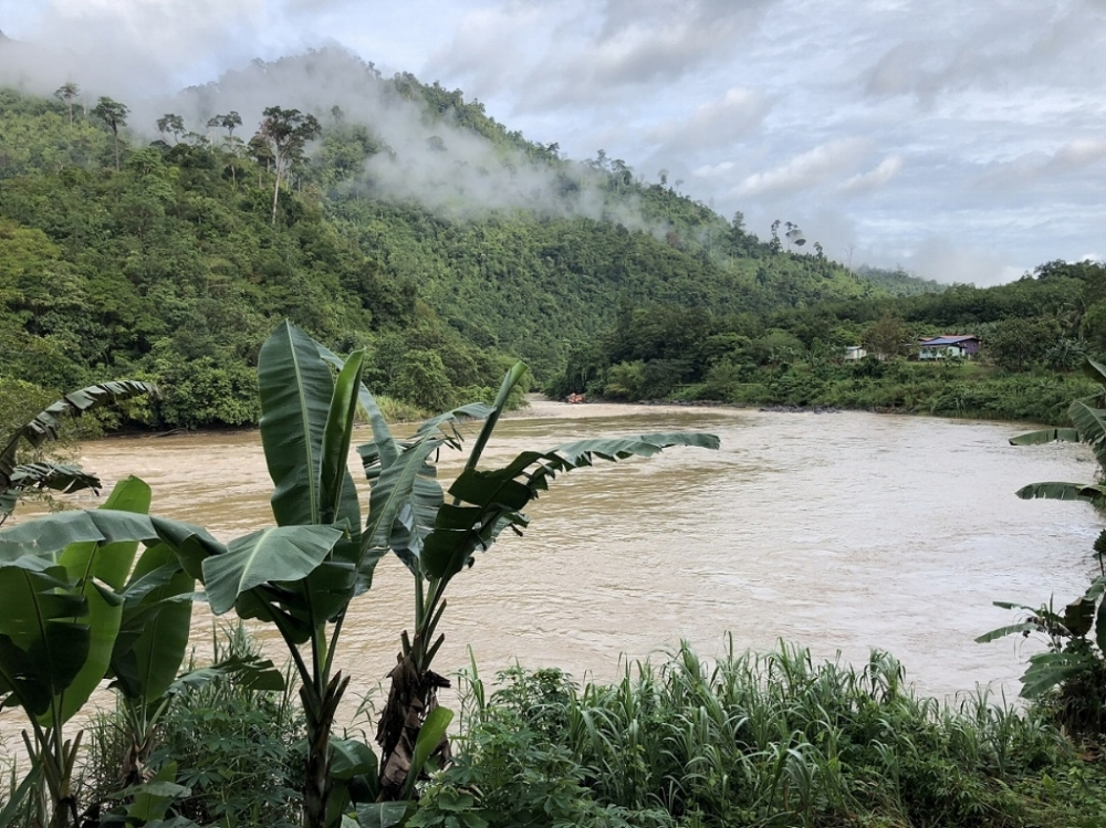 Sungai Padas  / River Padas - the mist lingers and in the foreground there are banana trees