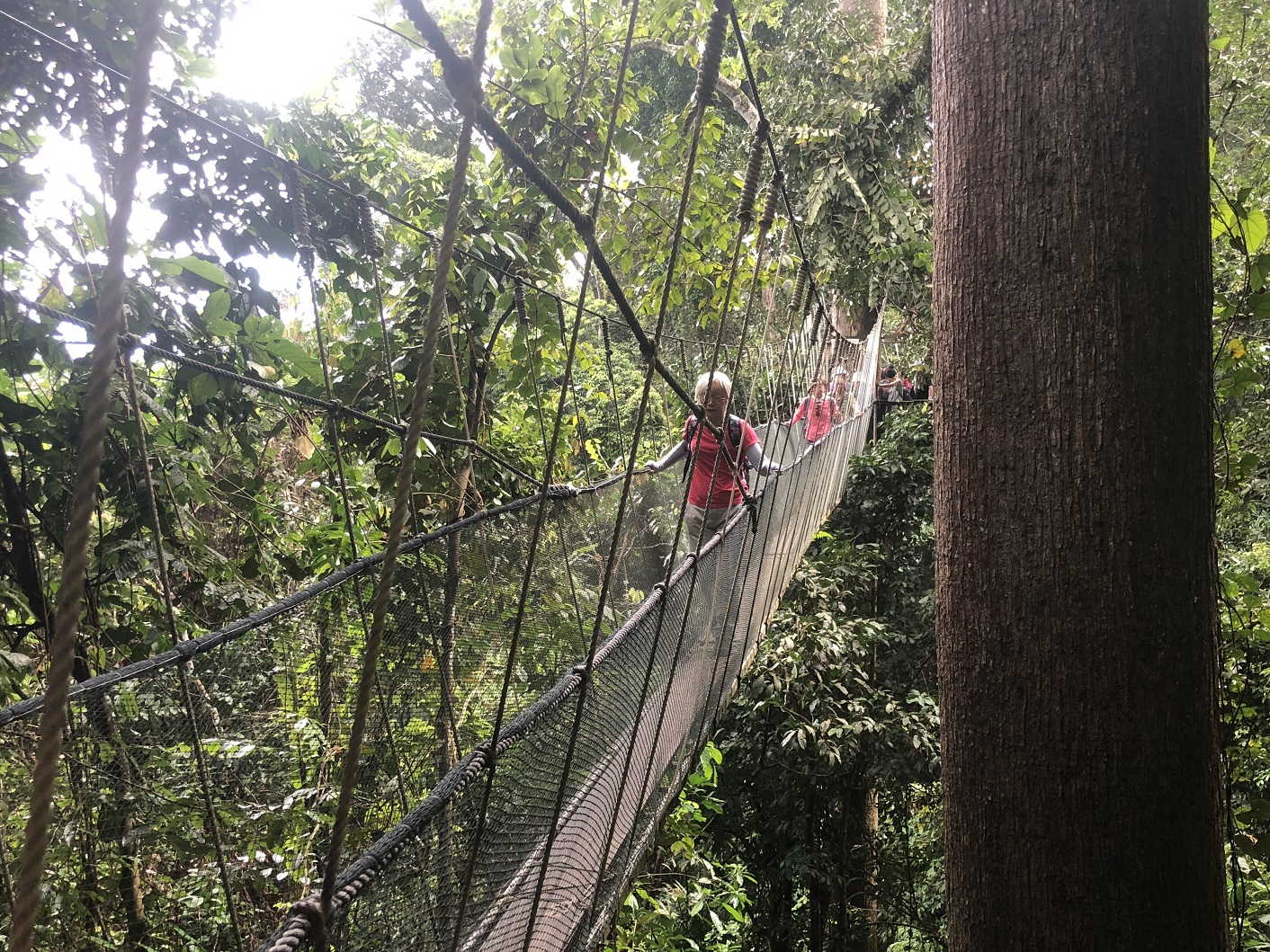 'Up close and personal' with the rainforest - enjoying the Poring Canopy Walkway